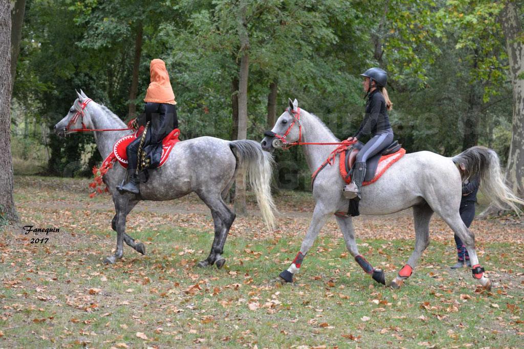 Fête du cheval à GRAULHET le 17 Septembre 2017 - Présentation de chevaux Arabes en main et monté élevage de GACIA - 1