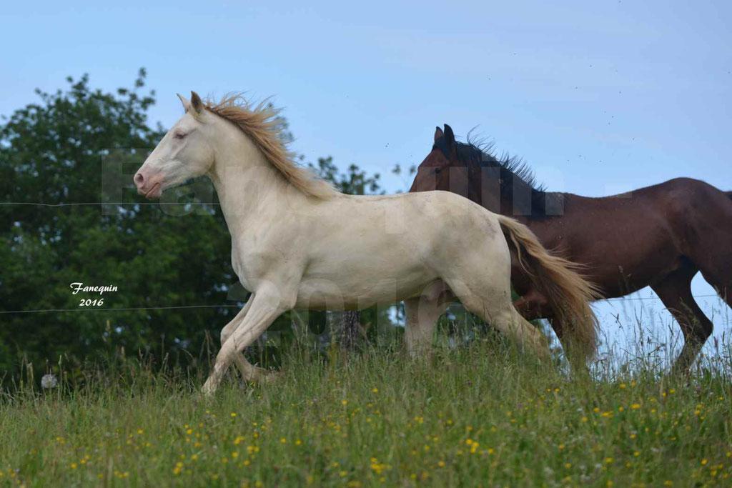 Chevaux PRE de l'élevage DEL TESSUOR - Frédérique VIGNE - 03