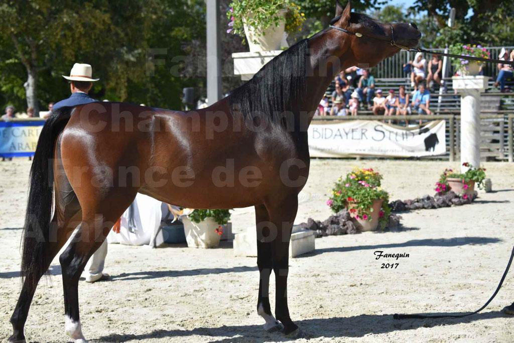 Championnat de France de chevaux Arabes à Pompadour les 19 & 20 Août 2017 - ESMAELIA AL HEVAN - 05