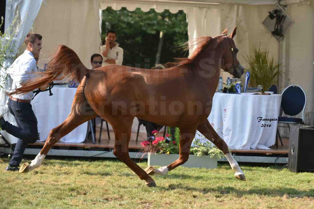 International Arabian Horse Show B de VICHY 2016 - DZHARI NUNKI - Notre Sélection - 42