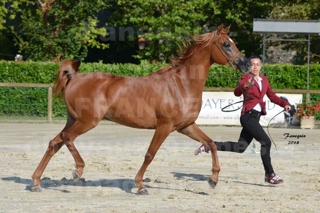Championnat de FRANCE de chevaux Arabes à Pompadour 2018 - MAAMAR ISHANE - Notre Sélection - 15