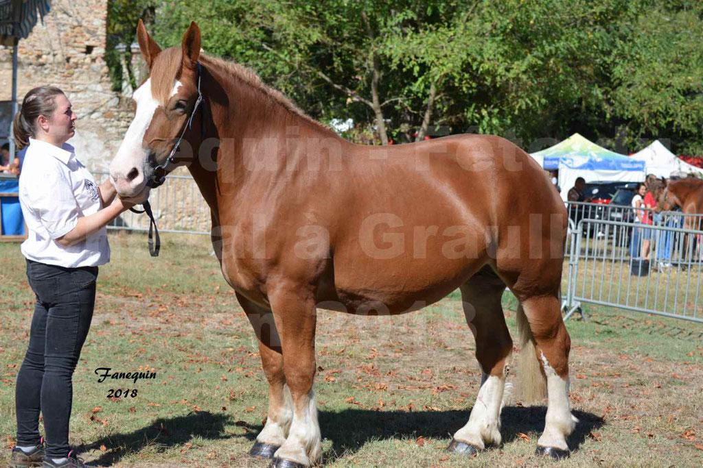 Fête du cheval à GRAULHET le 16 septembre 2018 - Concours Départemental de chevaux de traits - 08
