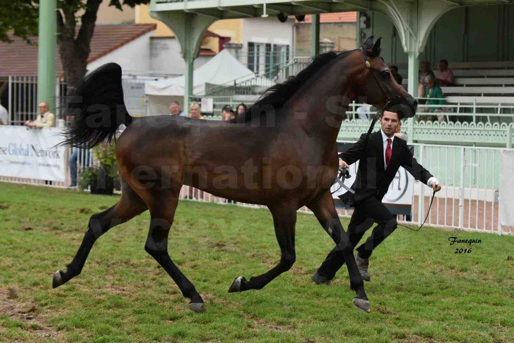 International Arabian Horse Show B de VICHY 2016 - MILLIAR - Notre Sélection - 02