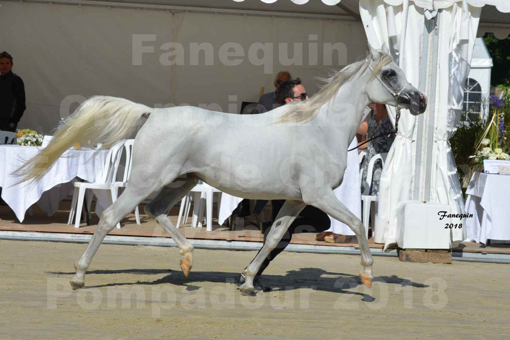 Championnat de FRANCE de chevaux Arabes à Pompadour en 2018 - ESTALIA - 13