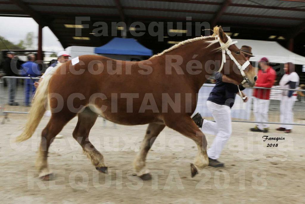 """Concours Régional """"OCCITANIE"""" de Chevaux de Traits à REQUISTA en 2018 - FAUVETTE DES BARDIS - 5"""