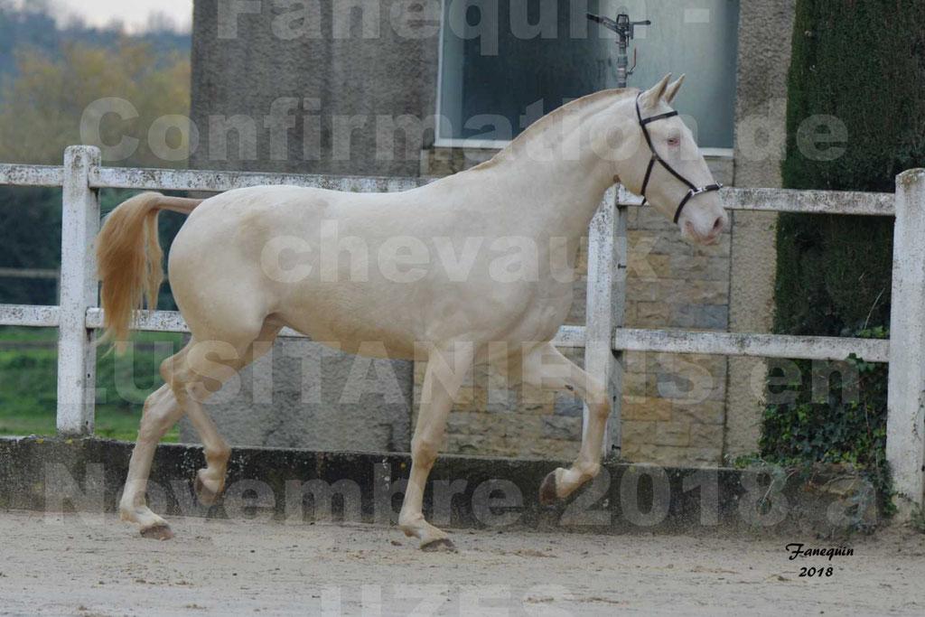 Confirmation de chevaux LUSITANIENS aux Haras d'UZES Novembre 2018 - LOLIBLOU - 32