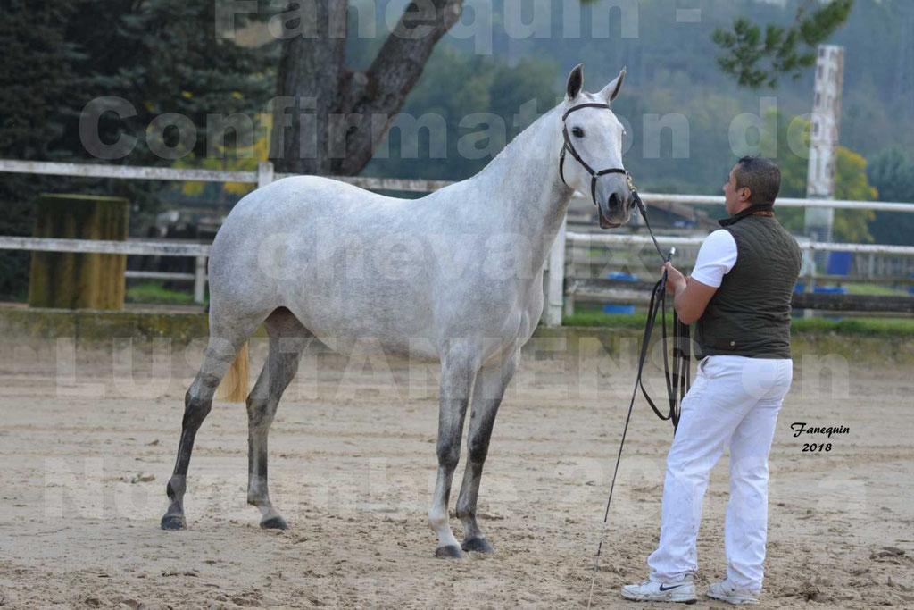 Confirmation de chevaux LUSITANIENS aux Haras d'UZES Novembre 2018 - DANAÏDE DU MOLE - 14