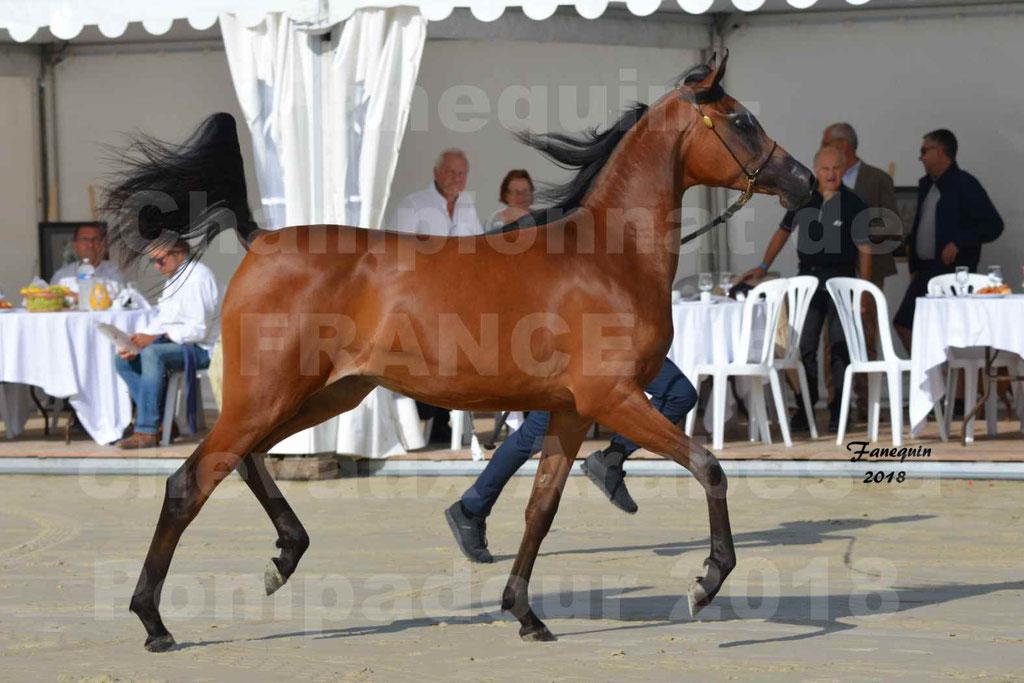 Championnat de FRANCE de chevaux Arabes à Pompadour en 2018 - BO AS ALEXANDRA - Notre Sélection - 19