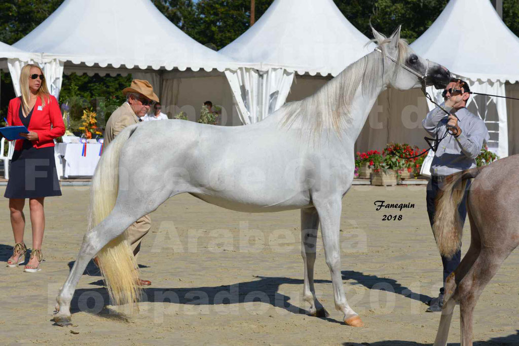 Championnat de FRANCE de chevaux Arabes à Pompadour en 2018 - ESTALIA - 39