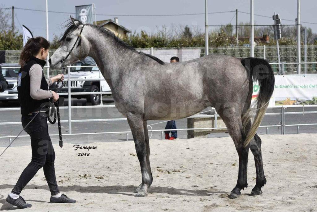 Concours d'élevage de Chevaux Arabes - Demi Sang Arabes - Anglo Arabes - ALBI les 6 & 7 Avril 2018 - FLORAC LARZAC - Notre Sélection - 6