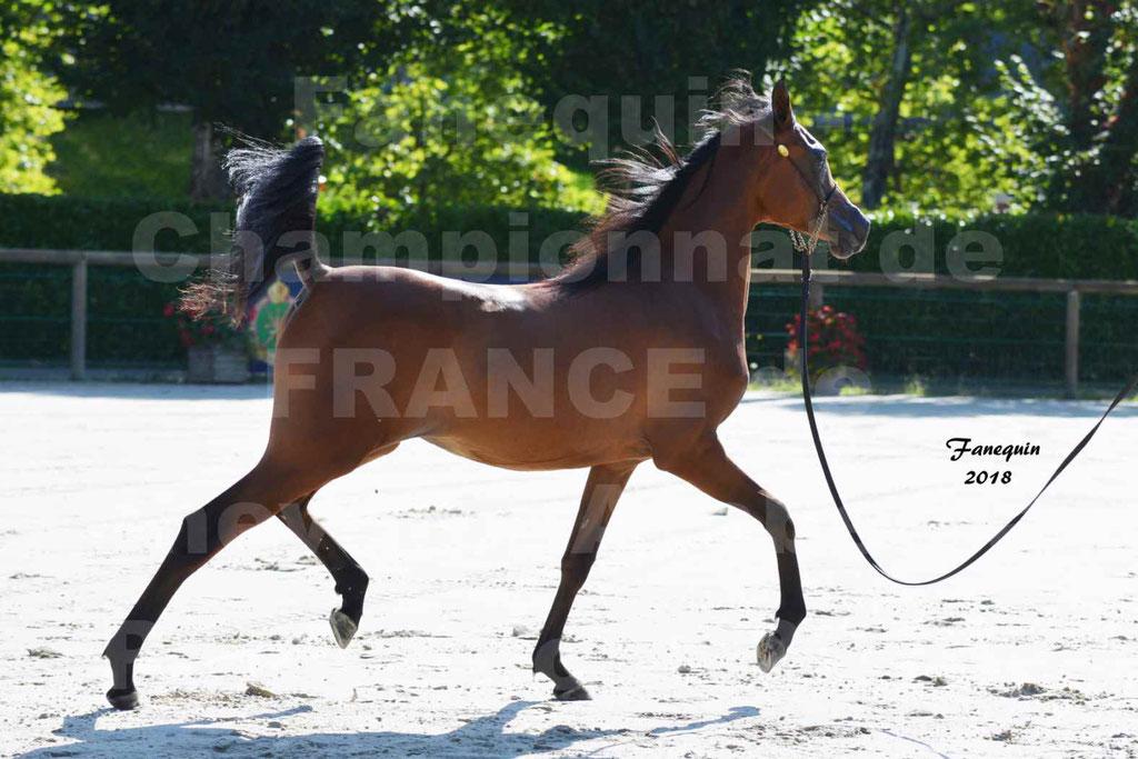 Championnat de FRANCE de chevaux Arabes à Pompadour en 2018 - BO AS ALEXANDRA - Notre Sélection - 37