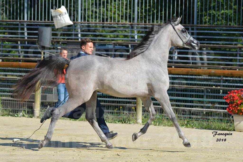 Championnat de FRANCE de chevaux Arabes à Pompadour en 2018 - SANIA DU CAYRON - Notre Sélection - 34