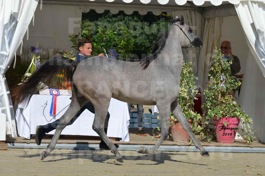 Championnat de FRANCE de chevaux Arabes à Pompadour en 2018 - SANIA DU CAYRON - Notre Sélection - 27