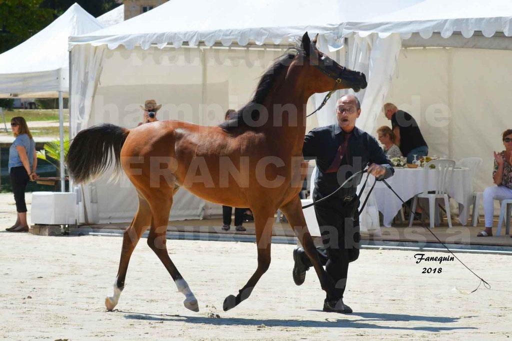 Championnat de FRANCE des chevaux Arabes à Pompadour en 2018 - SH CHARISMA - Notre Sélection - 11