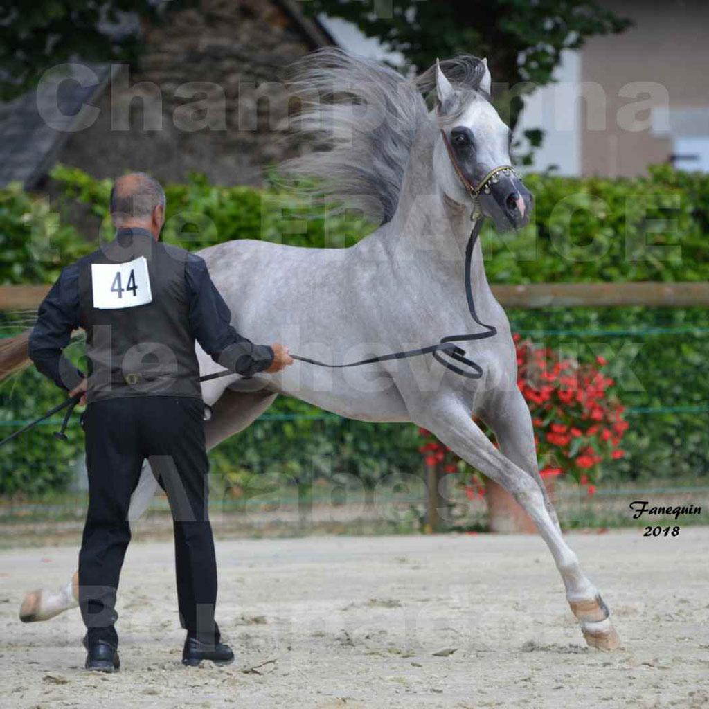 Championnat de FRANCE de chevaux Arabes à Pompadour en 2018 - SH CHAGALL - Notre Sélection - 12
