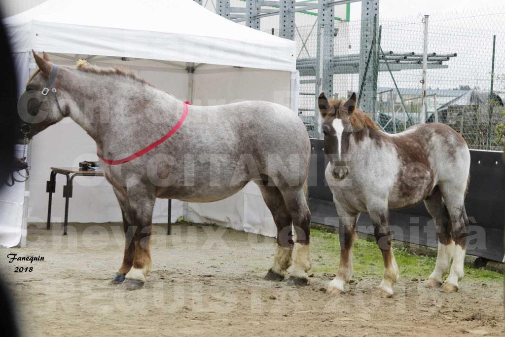 """Concours Régional """"OCCITANIE"""" Modèles et Allures de chevaux de trait à REQUISTA en 2018 - PORTRAITS - 24"""