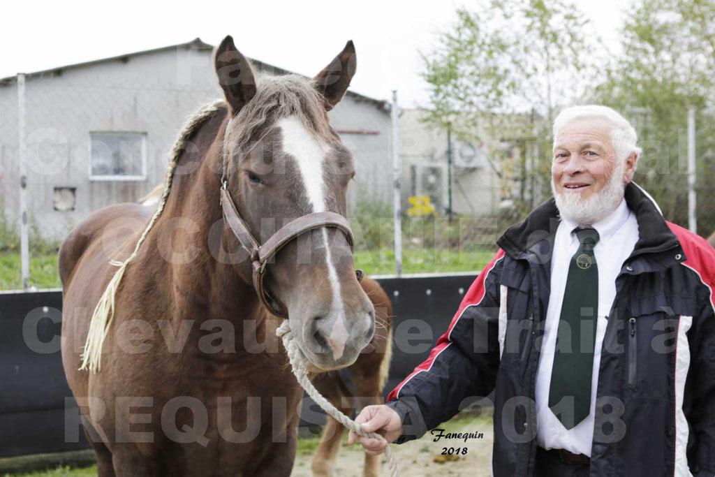 """Concours Régional """"OCCITANIE"""" Modèles et Allures de chevaux de trait à REQUISTA en 2018 - PORTRAITS - 22"""