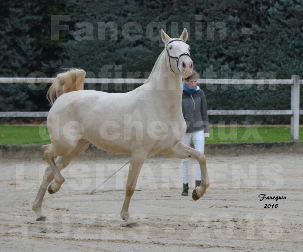 Confirmation de chevaux LUSITANIENS de Novembre 2018 - LOLIBLEU