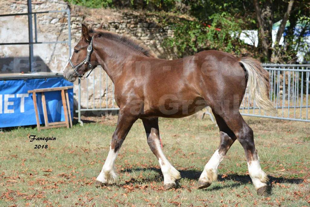 Fête du cheval à GRAULHET le 16 septembre 2018 - Concours Départemental de chevaux de traits - 27