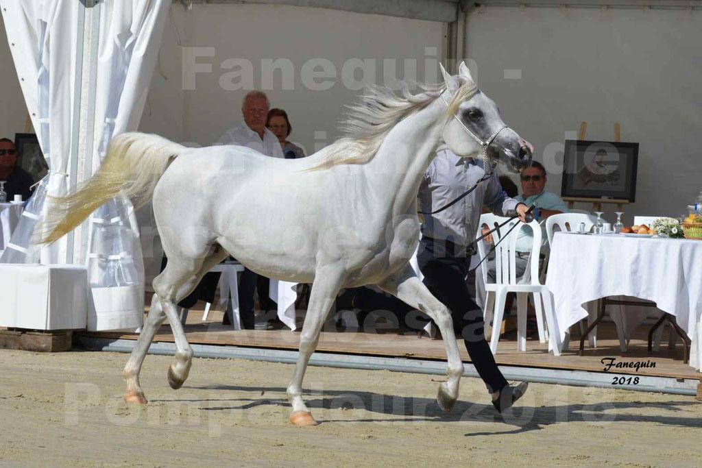 Championnat de FRANCE de chevaux Arabes à Pompadour en 2018 - ESTALIA - 08