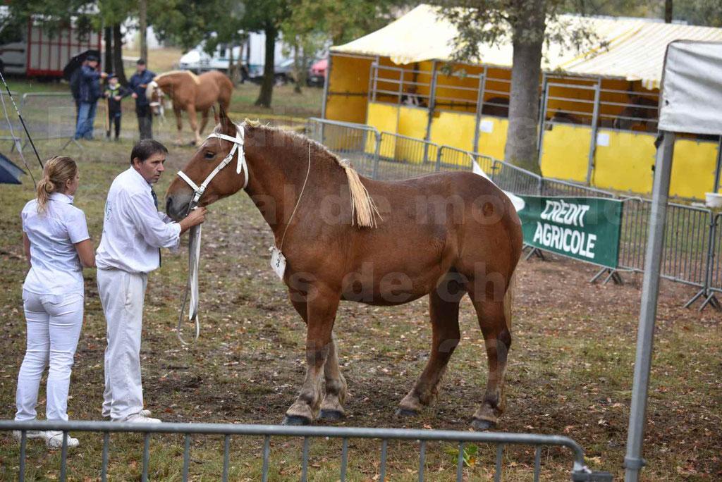 Concours Régional de chevaux de traits en 2017 - Trait COMTOIS - FIDJY DE GRILLOLES - 09