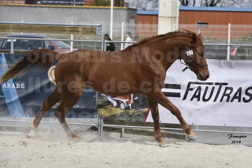 Concours d'élevage de Chevaux Arabes - Demi Sang Arabes - Anglo Arabes - ALBI les 6 & 7 Avril 2018 - FOXTROT DU GRIOU - Notre Sélection - 4