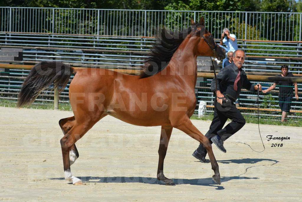 Championnat de FRANCE des chevaux Arabes à Pompadour en 2018 - SH CHARISMA - Notre Sélection - 22