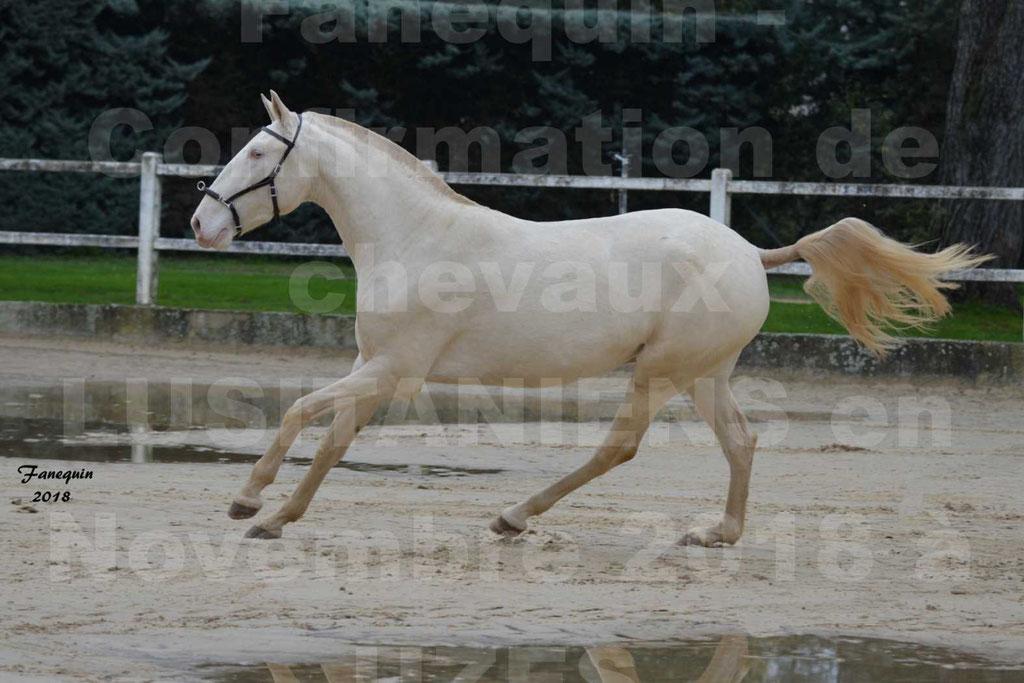 Confirmation de chevaux LUSITANIENS aux Haras d'UZES Novembre 2018 - LOLIBLOU - 17