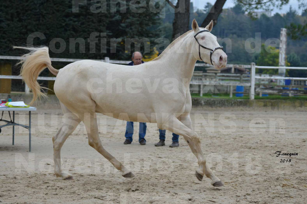 Confirmation de chevaux LUSITANIENS aux Haras d'UZES Novembre 2018 - LOLIBLOU - 24