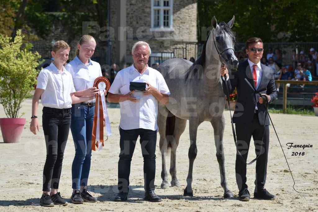 Championnat de FRANCE de chevaux Arabes à Pompadour en 2018 - SANIA DU CAYRON - Notre Sélection - 21