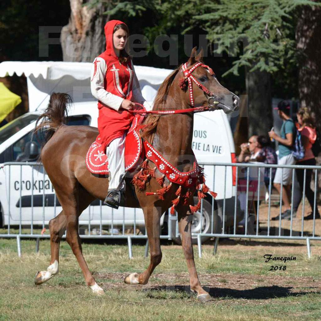 Fête du cheval à GRAULHET le 16 septembre 2018 - Présentation de chevaux Arabe Elevage de GACIA - 09