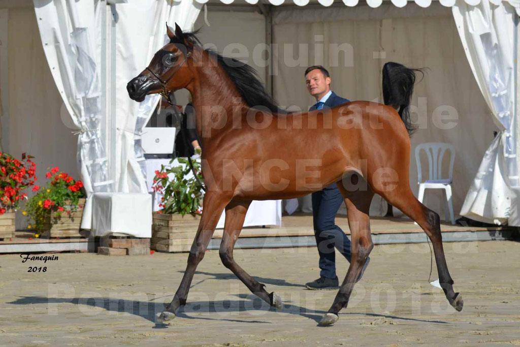 Championnat de FRANCE de chevaux Arabes à Pompadour en 2018 - BO AS ALEXANDRA - Notre Sélection - 25