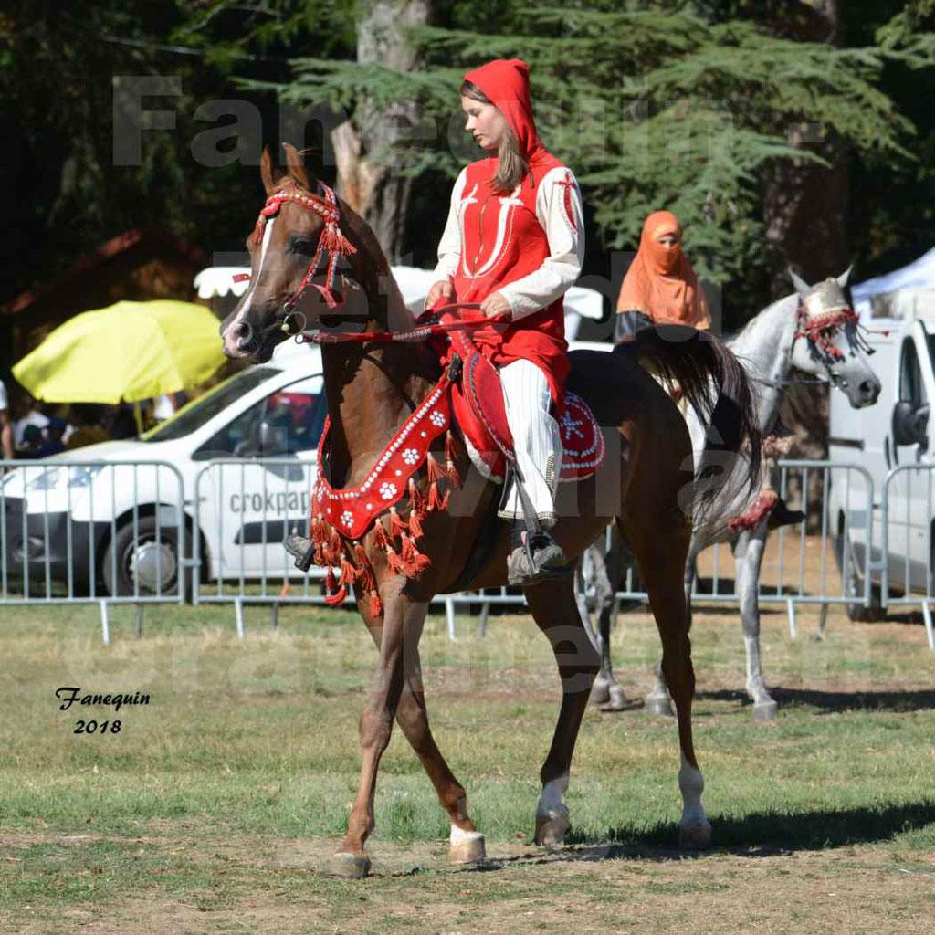 Fête du cheval à GRAULHET le 16 septembre 2018 - Présentation de chevaux Arabe Elevage de GACIA - 4