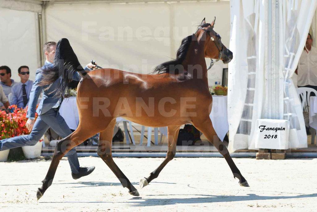 Championnat de FRANCE de chevaux Arabes à Pompadour en 2018 - BO AS ALEXANDRA - Notre Sélection - 02