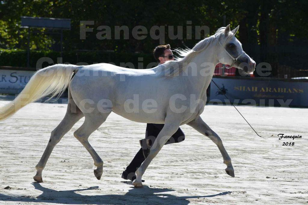 Championnat de FRANCE de chevaux Arabes à Pompadour en 2018 - ESTALIA - 26