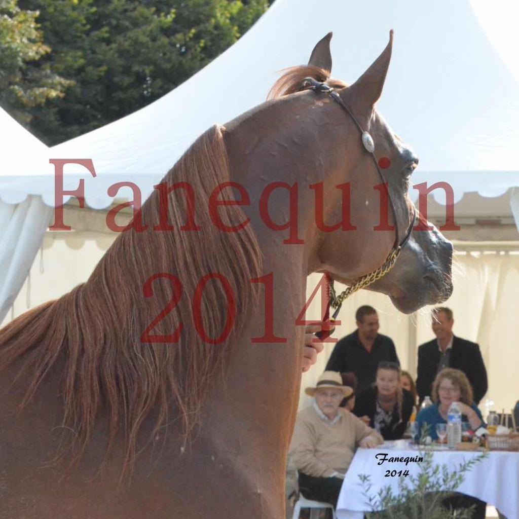 CHAMPIONNAT DE FRANCE 2014 A POMPADOUR - Notre Sélection - Portraits - AINHOA LE BASQUE - 3