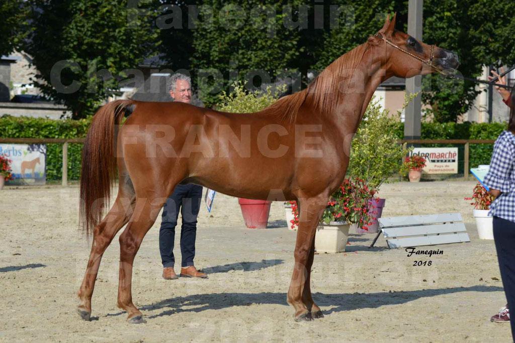 Championnat de FRANCE de chevaux Arabes à Pompadour 2018 - MAAMAR ISHANE - Notre Sélection - 22
