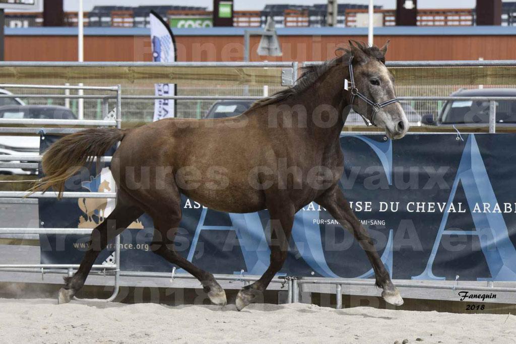 Concours d'élevage de Chevaux Arabes - Demi Sang Arabes - Anglo Arabes - ALBI les 6 & 7 Avril 2018 - FARAH DU CARRELIE - Notre Sélection - 05