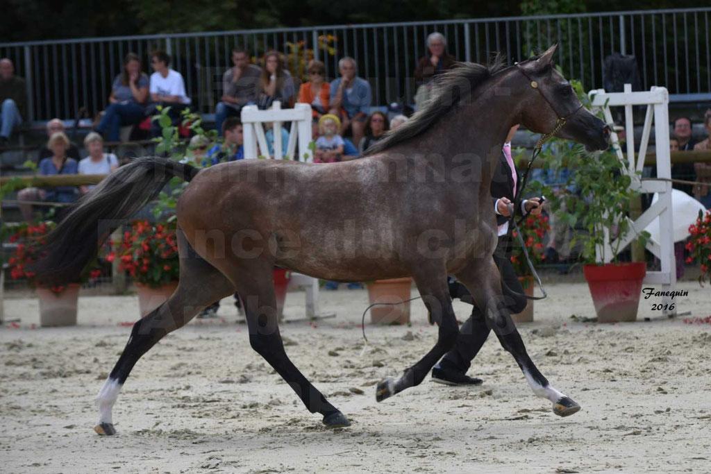 Championnat de France de chevaux Arabes 2016 à Pompadour - AÏNHOA MA PTIT FOLIE - 02