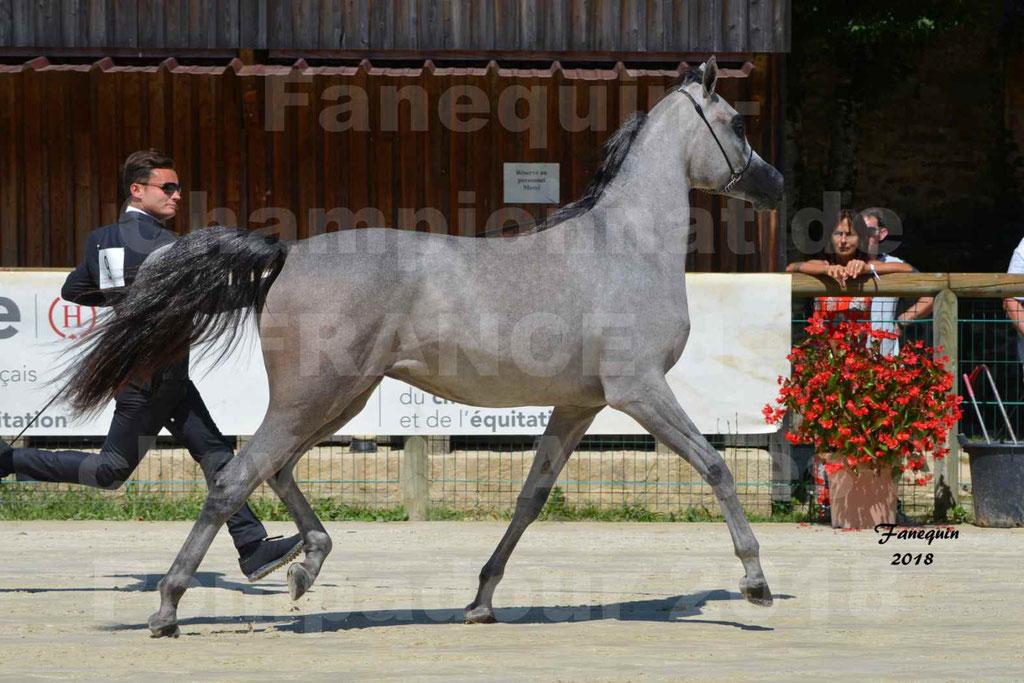 Championnat de FRANCE de chevaux Arabes à Pompadour en 2018 - SANIA DU CAYRON - Notre Sélection - 14
