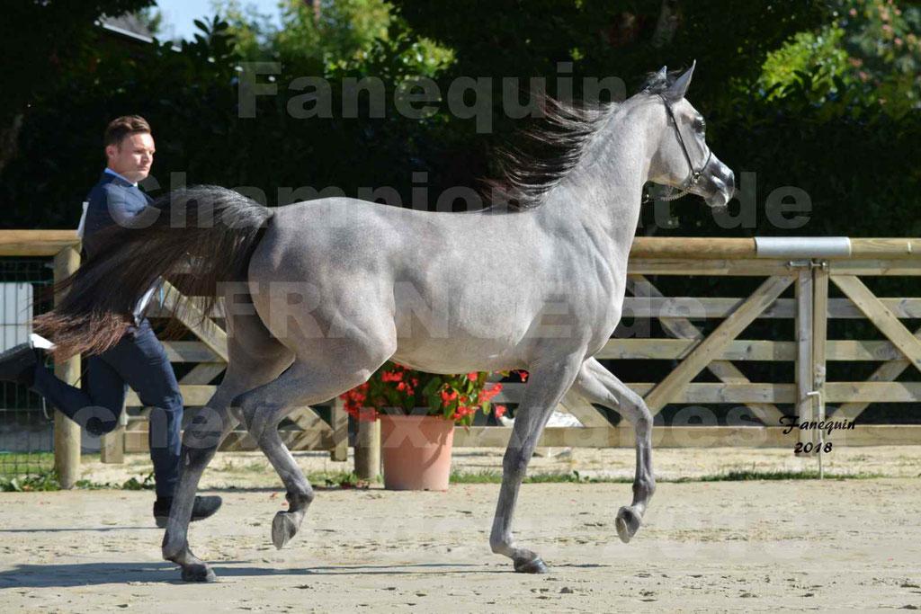 Championnat de FRANCE de chevaux Arabes à Pompadour en 2018 - SANIA DU CAYRON - Notre Sélection - 39