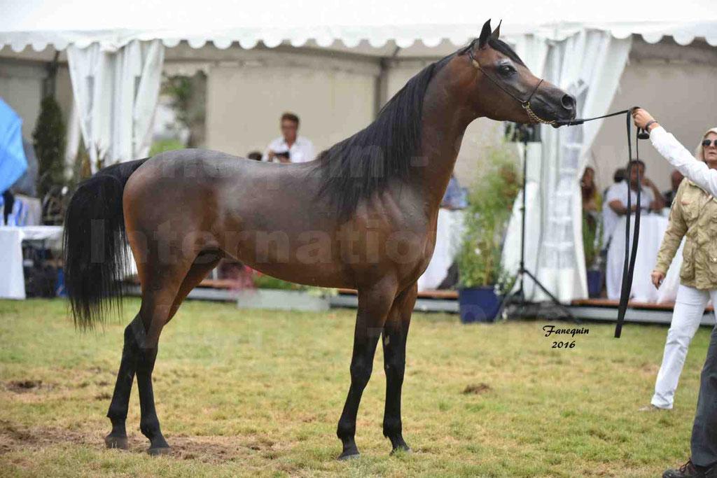 International Arabian Horse Show B de VICHY 2016 - MILLIAR - Notre Sélection - 37