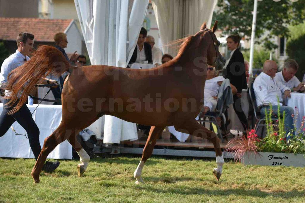 International Arabian Horse Show B de VICHY 2016 - DZHARI NUNKI - Notre Sélection - 39