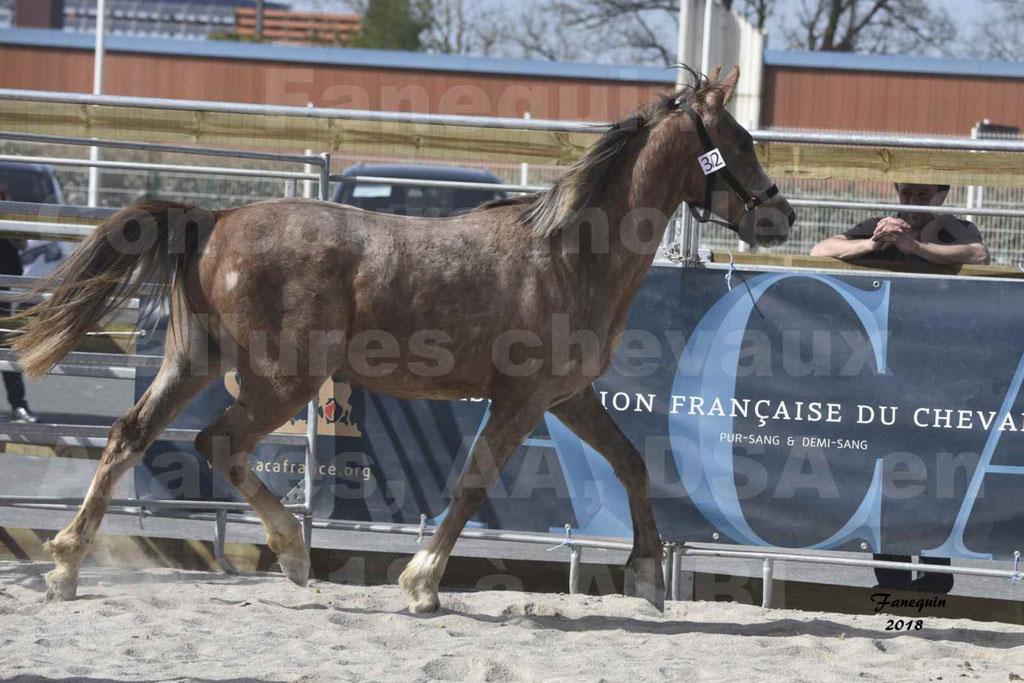 Concours d'élevage de Chevaux Arabes - Demi Sang Arabes - Anglo Arabes - ALBI les 6 & 7 Avril 2018 - GAZIM DU CARRELIE - Notre Sélection - 06