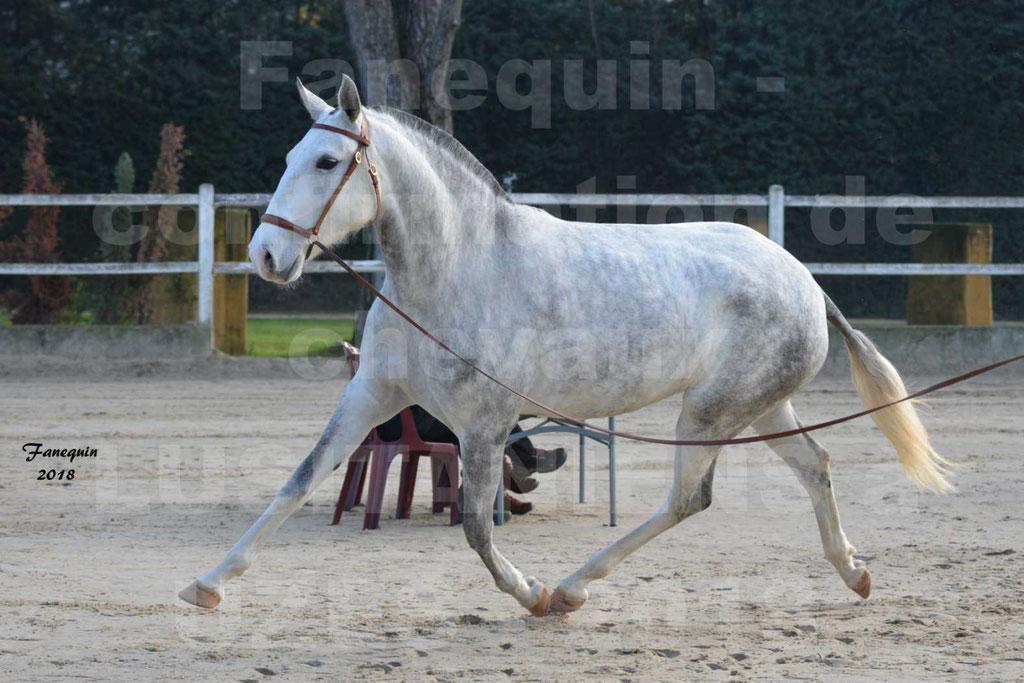 Confirmation de chevaux LUSITANIENS aux Haras d'UZES Novembre 2018 - LUTECE DU CASTEL - 18