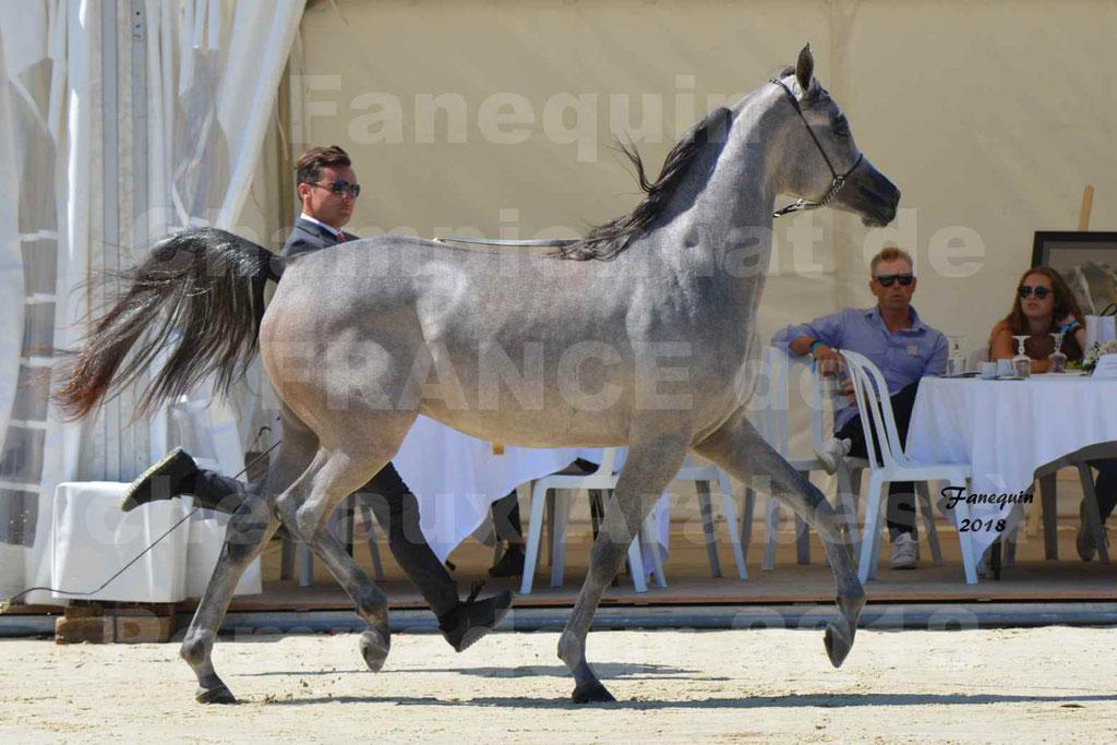 Championnat de FRANCE de chevaux Arabes à Pompadour en 2018 - SANIA DU CAYRON - Notre Sélection - 08