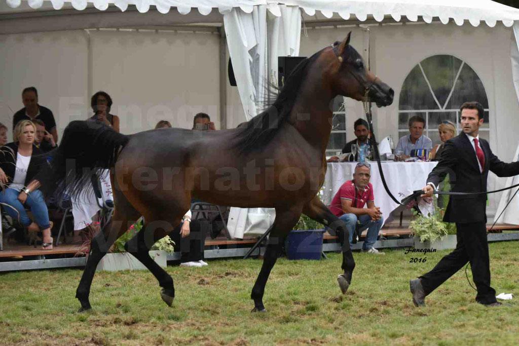 International Arabian Horse Show B de VICHY 2016 - MILLIAR - Notre Sélection - 10