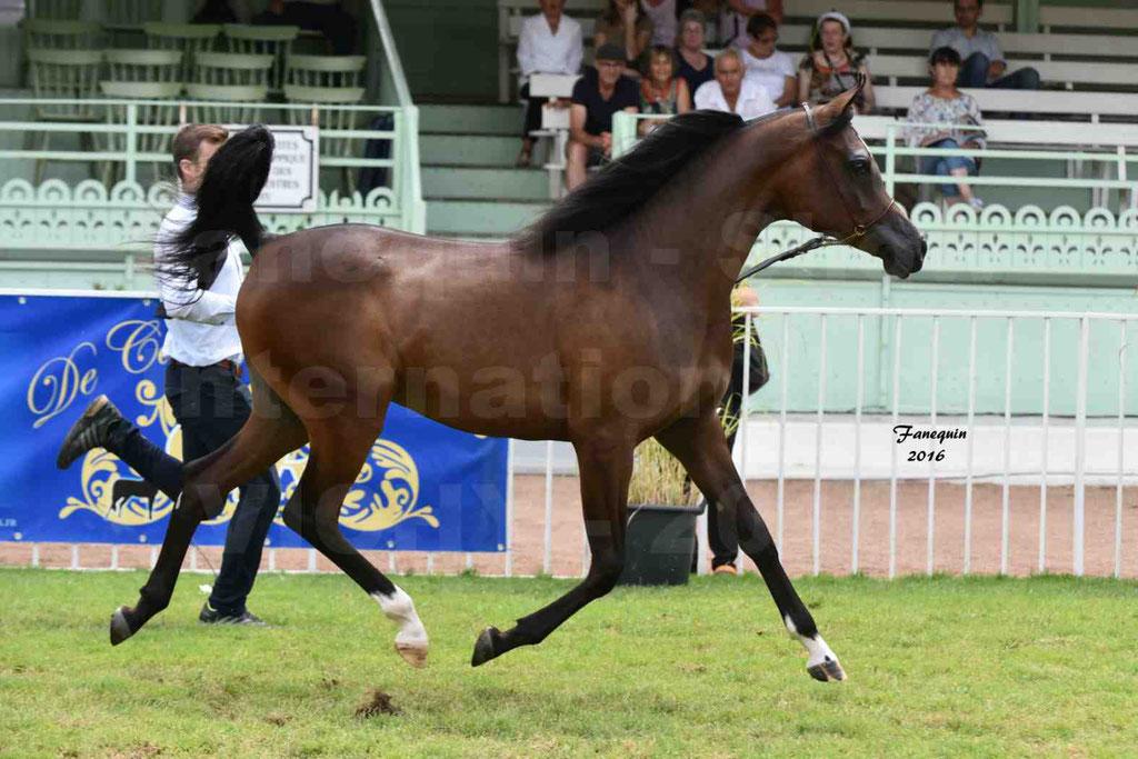 International Arabian Horse Show B de VICHY 2016 - ESMAELIA AL HEVAN - Notre Sélection - 09