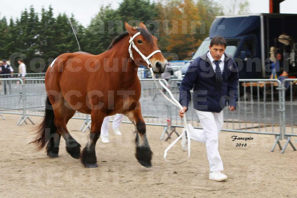 Concours Régional OCCITANIE de chevaux de traits à REQUISTA - COMETE DE GRILLOLES - 02