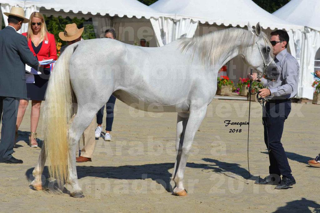 Championnat de FRANCE de chevaux Arabes à Pompadour en 2018 - ESTALIA - 40